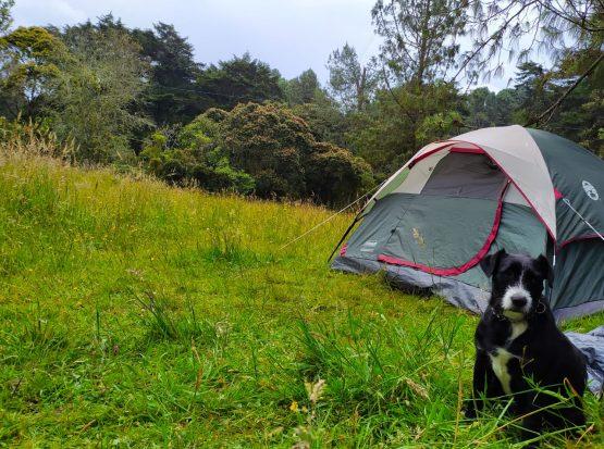 Camping Montevivo